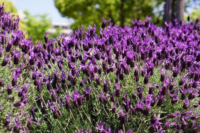 テイクアウトモーニング持参で花の中をお散歩