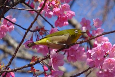 馬場花木園散歩 1~2月の花(15種)