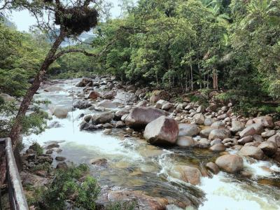 【モスマン渓谷(ケアンズ周辺)/オーストラリア】世界遺産熱帯雨林散策 ◆MAR/2020◆