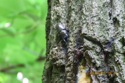 森のさんぽ道で見られた昆虫