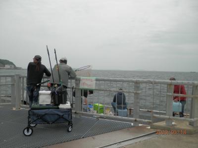豊浜16と17釣り桟橋 閉鎖解除されましたけれども群れはサバになりました