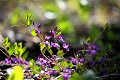 ◆福島・四季・彩々・Part,88・晩春の候