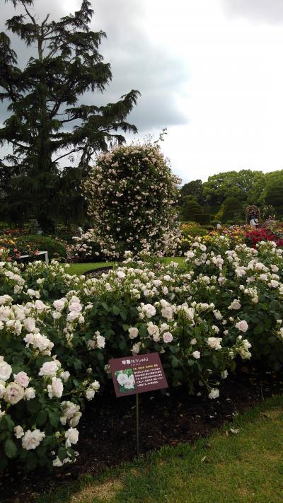 京都植物園の四季-その3(バラ)
