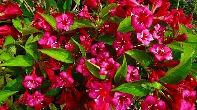 みどりのプラザと荒牧バラ公園に咲く花 その1。