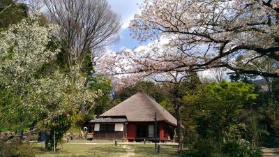 馬場花木園散歩 3月の花(26種)