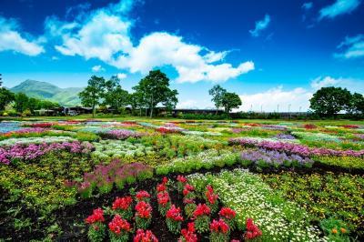 くじゅう花公園 2020年5月