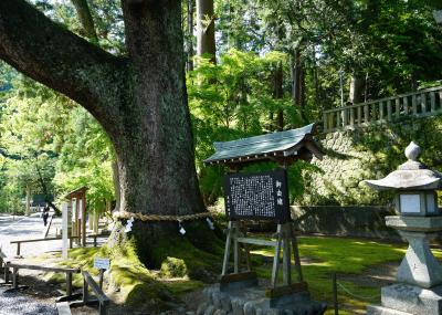 一宮巡詣~遠江・事任八幡宮と加茂花菖蒲園(2020.5)