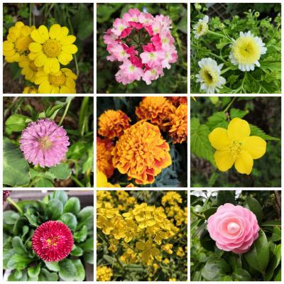 ☆2020年4月~5月のお花 お散歩でピクニック気分!☆ 多摩湖自転車道路近辺