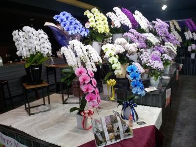 久々のお出掛けで花屋さんに行ってきました!!