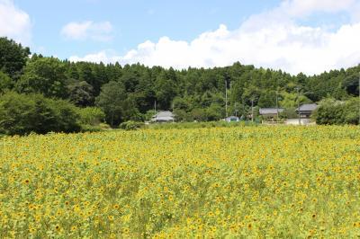 大網白里市のひまわり畑と笠森観音へ行く日帰り旅