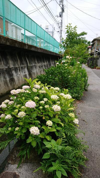 玉水町~鏡川さんぽ