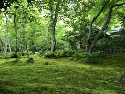 青モミジの嵐山散策 5月25日 祇王寺・二尊院・竹林の小径・天龍寺庭園