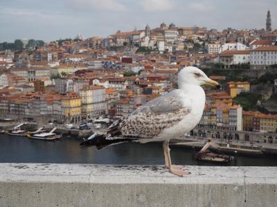 懐かしさ溢れるポルトガルの旅