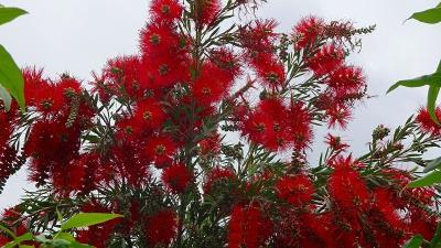 ご近所・・・荒牧・荒牧南・荻野地区で咲く花を撮影しました その1。