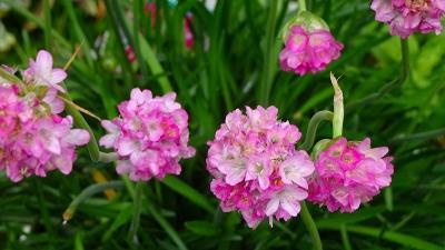 ご近所・・・荒牧・荒牧南・荻野地区で咲く花を撮影しました その4。