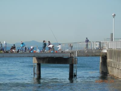 車中泊その2豊浜19釣り桟橋 ザワつくサバ イワシは来ない アジはさっぱり