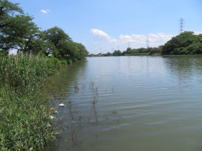 越谷の元荒川堤から越谷梅林を見て大戸の武蔵第六天神社へ