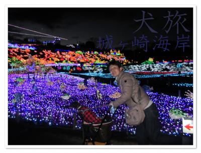 犬旅 ~城ヶ崎海岸2020~