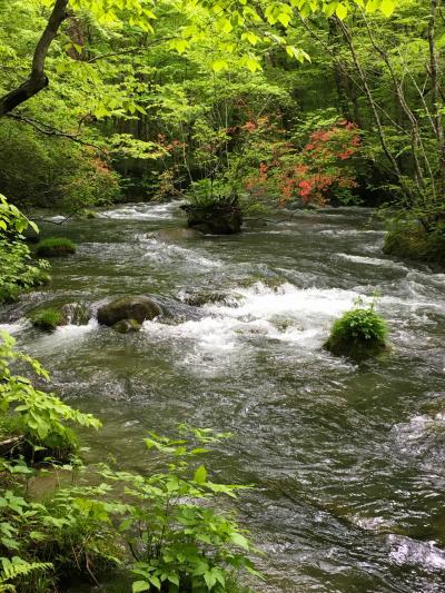 2018初夏  新緑の奥入瀬渓流