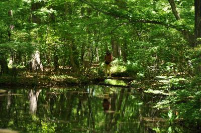 森に癒しを求めて! 赤城自然園