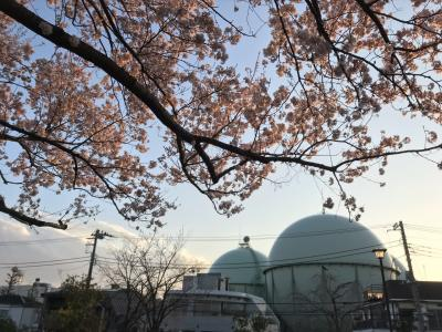 芦花公園・新宿