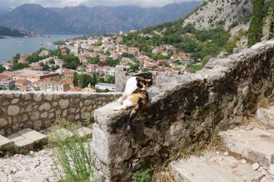 よい景色を見るには体力がいる バルカン半島の旅 3日目(ドゥブロヴニク→コトル→モスタル)