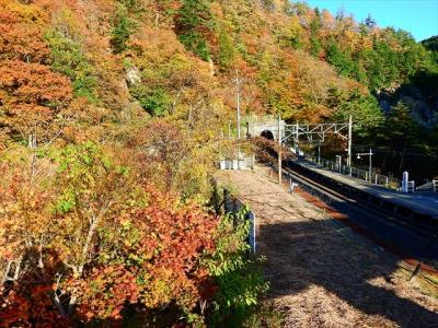面白山紅葉川渓谷の紅葉