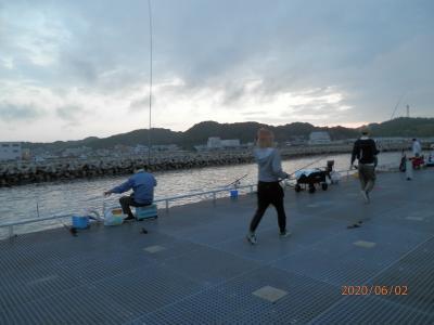 車中泊3豊浜20釣り桟橋 グレが釣れた