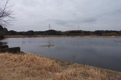 川尾池でバードウォッチング [2018](1)