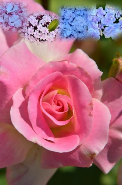春風に誘われて春色に染まってる春爛漫の園内へ