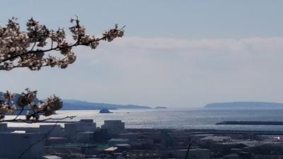 石巻日和山の桜 【石巻散歩2020】