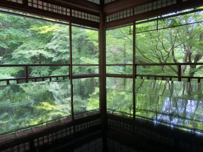 6月3日 青紅葉と苔 床紅葉のきれいな瑠璃光院へ