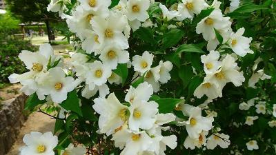 続けて、笹原公園に咲くお花を見に行きました その5完。
