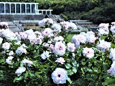 2020年兵庫の初夏の花々、加西の県立フラワーセンター~神戸の須磨離宮公園を歩きます!