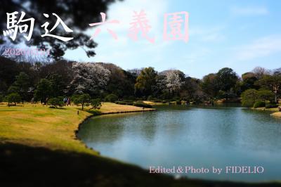 2020春 駒込・六義園 散策記 ~江戸の大名庭園でお花見~