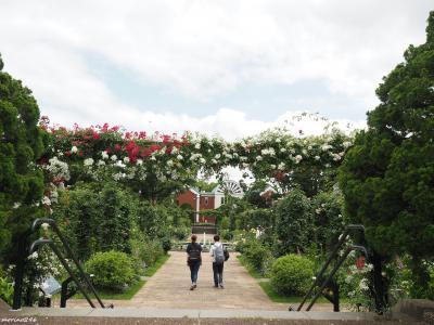 バラの見頃は過ぎたけど@ガーデンネックレス横浜2020(最終章)