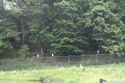 兵庫県豊岡市コウノトリの郷公園を訪ねる 2020 6.6