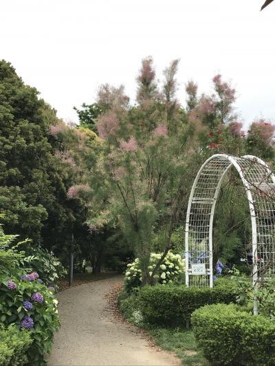 花を求めて 弁天ふれあいの森公園