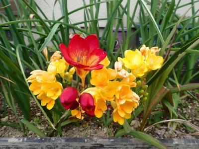 我が家の花と野菜たち