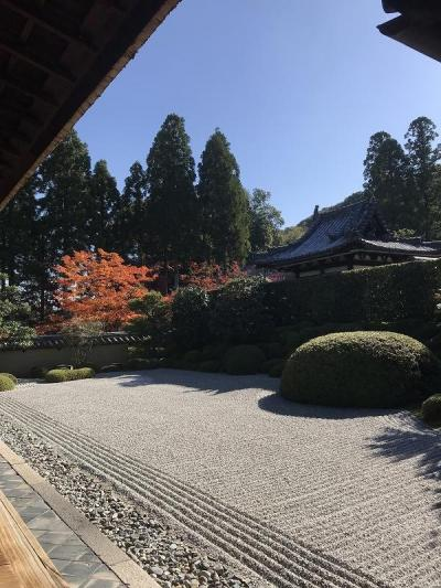 紅葉散策2019 ~一休さんのお寺へ行ってみた~