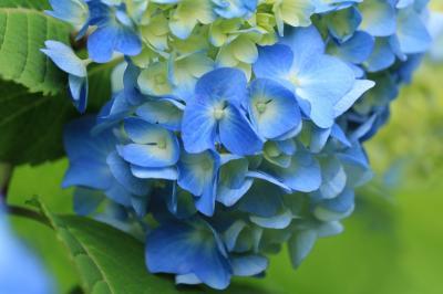 ショートトリップ花巡り♪ 千種公園の香しいユリ、鞍ヶ池公園の温室の花&松平郷雨上がりの初夏の花♪