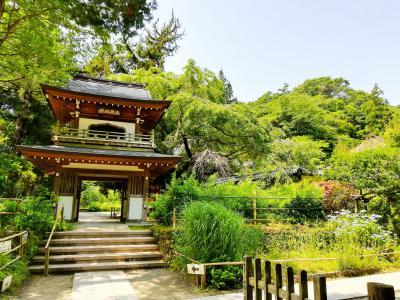 紫陽花咲く 鎌倉へ 歴史探訪の散歩 前編