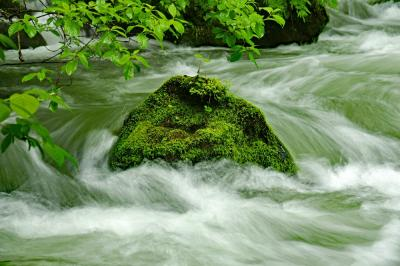 新緑の奥入瀬渓流から大釜温泉へ(思い出を辿る)