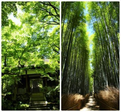 ~初夏の光を浴びて輝く若緑の世界~ 京都 嵐山・嵯峨野の寺社巡り