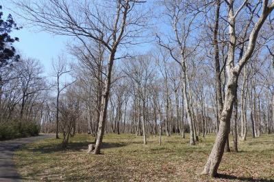 水郷県民の森でバードウォッチング [2018](4) (後編)