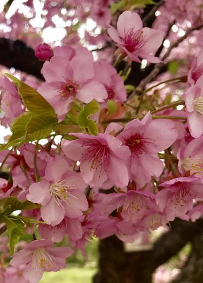 2020年 春休み親子旅は湯河原と箱根の温泉へ☆vol.10 ふらっと歩いて小田原城へ行ってみよう('∀'rその1。