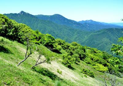 初夏の入道ヶ岳(906m)