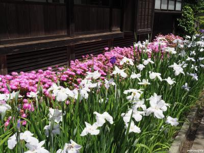 梅雨入り前の鎌倉散歩:(3)海蔵寺、妙本寺ほか