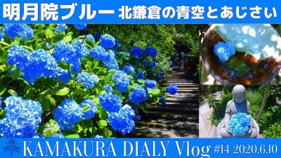 明月院ブルー 2020 北鎌倉の青空とあじさいの共演