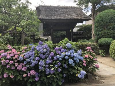鎌倉のあじさい巡り(極楽寺~佛行寺)